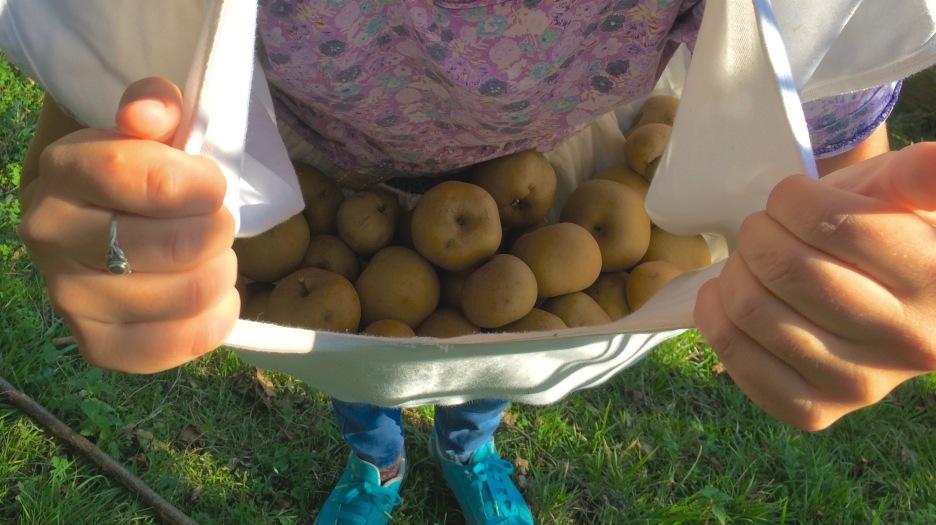 03 apple picking