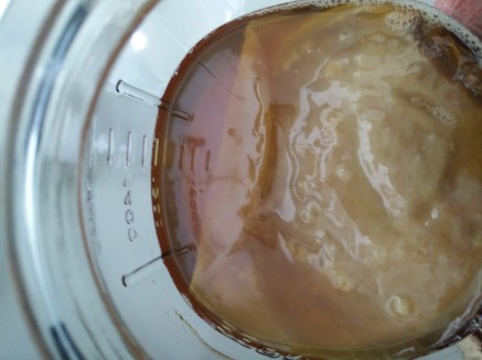 05 SCOBY