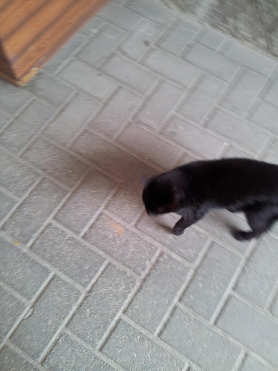 15 gatto