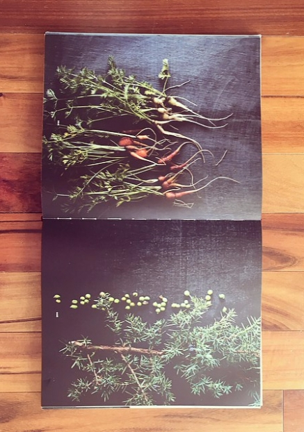NOMA: Time and Place in Nordic Cuisine, page 144